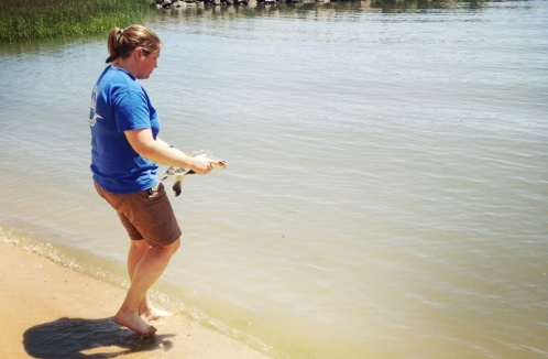 Dr. Christiansen releasing the Sea Turtle after removing the fisherman's hook.
