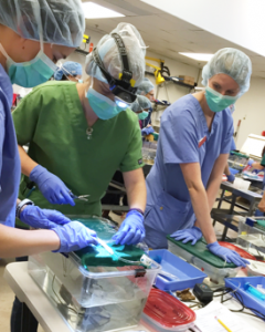 NC State CVM students monitoring an eel under anesthesia