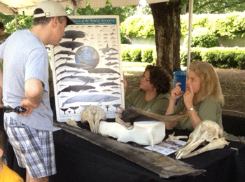 Dr. Vicky Thayer educates the public about whale vertebrae