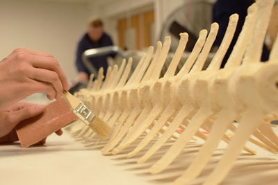 Book binder's glue being applied to skeleton bones with a brush.