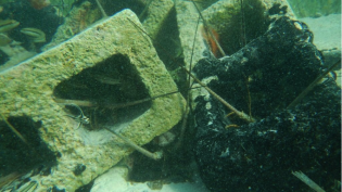 Soundscapes, Habitat Characteristics, and Fish Assemblages of Caribbean Artificial Reefs