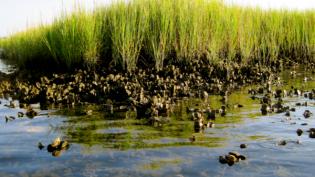 Habitat-Associated Soundscapes & Larval Settlement